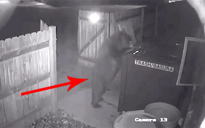 Bear 'Steals' Entire Dumpster From Pot Shop in Colorado